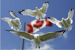 FX168北美分站加拿大国庆日特别视频 Happy Canada Day!