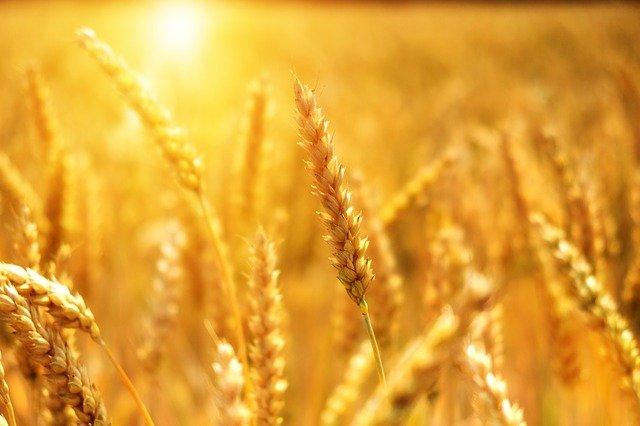 世界最大贸易商:中国农产品购买狂潮不灭 中美贸易协定不明但依旧乐观